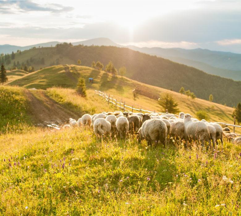 Fédération pastorale de l'Ariège