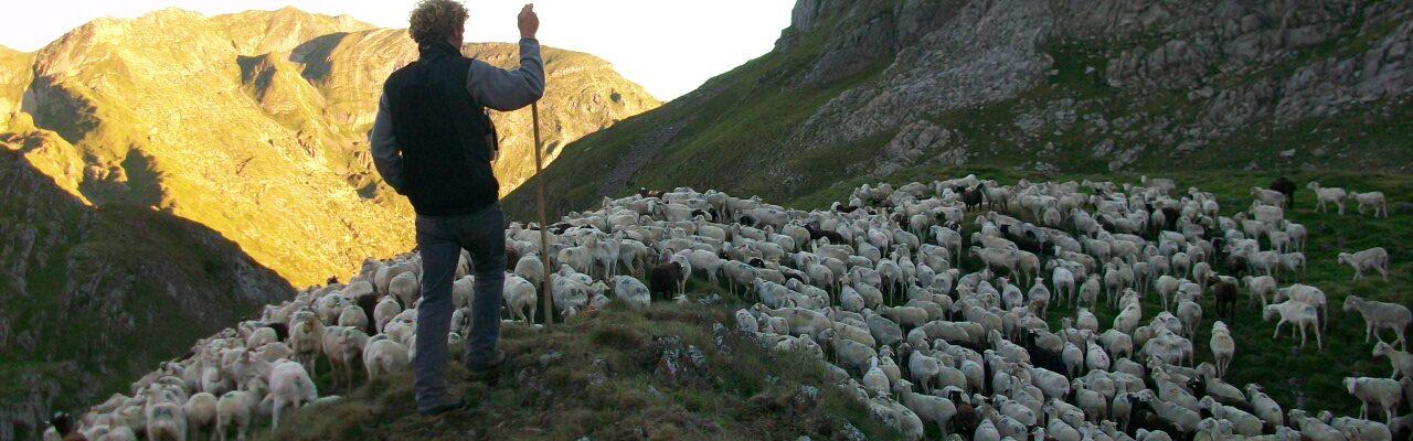 La bourse d'emploi des vachers-bergers d'estive est ouverte